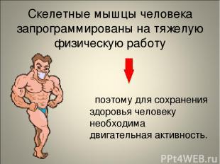 Скелетные мышцы человека запрограммированы на тяжелую физическую работу поэтому