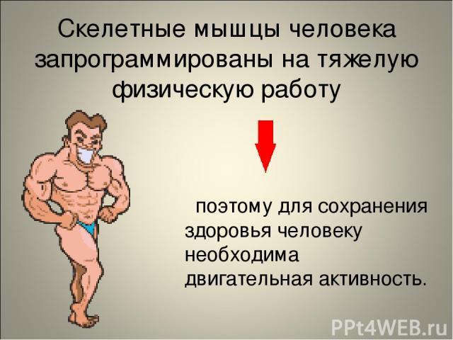 Скелетные мышцы человека запрограммированы на тяжелую физическую работу поэтому для сохранения здоровья человеку необходима двигательная активность.
