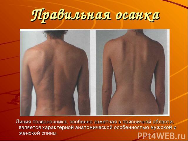 Правильная осанка Линия позвоночника, особенно заметная в поясничной области, является характерной анатомической особенностью мужской и женской спины.