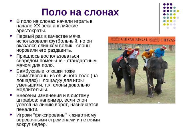 Поло на слонах В поло на слонах начали играть в начале ХХ века английские аристократы. Первый раз в качестве мяча использовали футбольный, но он оказался слишком велик - слоны норовили его раздавить. Пришлось воспользоваться снарядом поменьше - стан…
