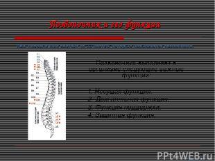 Позвоночник выполняет в организме следующие важные функции: 1. Несущая функция.