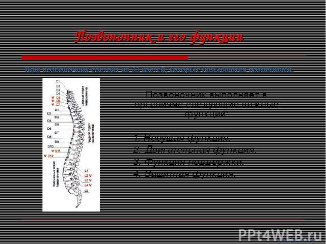Позвоночник выполняет в организме следующие важные функции: 1. Несущая функция. 2. Двигательная функция. 3. Функция поддержки. 4. Защитная функция. Наш позвоночник состоит из 33 костей, которые называются позвонками. Позвоночник и его функции Содержание