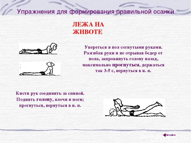 Упражнения для формирования правильной осанки ЛЕЖА НА ЖИВОТЕ Упереться в пол согнутыми руками. Разгибая руки и не отрывая бедер от пола, запрокинуть голову назад, максимально прогнуться, держаться так 3-5 с, вернуться в и. п. Кисти рук соединить за …