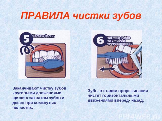 ПРАВИЛА чистки зубов Заканчивают чистку зубов круговыми движениями щетки с захватом зубов и десен при сомкнутых челюстях. Зубы в стадии прорезывания чистят горизонтальными движениями вперед- назад.