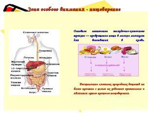 Зона особого внимания - пищеварение Основное назначение желудочно-кишечного трак