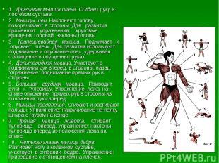 Строение мышц 1. Двуглавая мышца плеча. Сгибает руку в локтевом суставе. 2. Мышц