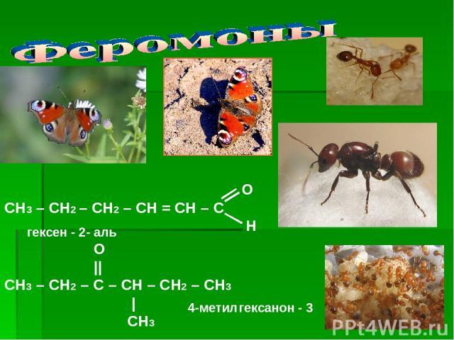 О СН3 – СН2 – СН2 – СН = СН – С Н O || СН3 – СН2 – С – СН – СН2 – СН3 | CH3 гексен - 2 - аль 4-метил гексанон - 3