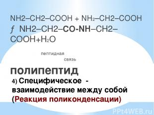 4) Специфическое - взаимодействие между собой (Реакция поликонденсации) NH2–CH2–