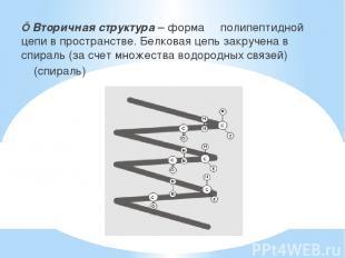■ Вторичная структура – форма полипептидной цепи в пространстве. Белковая цепь з