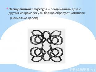 Четвертичная структура – соединенные друг с другом макромолекулы белков образуют