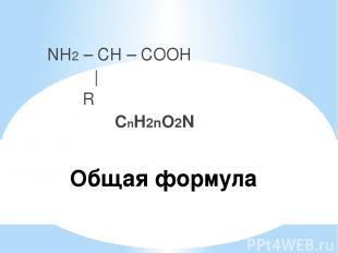 Общая формула NH2 – CH – COOH   R СnH2nO2N