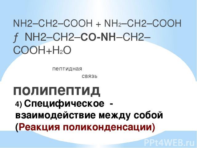 4) Специфическое - взаимодействие между собой (Реакция поликонденсации) NH2–CH2–COOH + NH2–CH2–COOH → NH2–CH2–CO-NH–CH2–COOH+Н2О пептидная связь полипептид