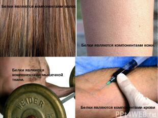 Белки являются компонентами волос Белки являются компонентами кожи. Белки являют