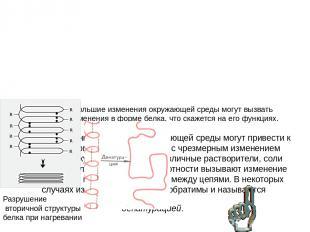 Классификация белков по их функциям • Структурные белки – коллаген, склеротин, э