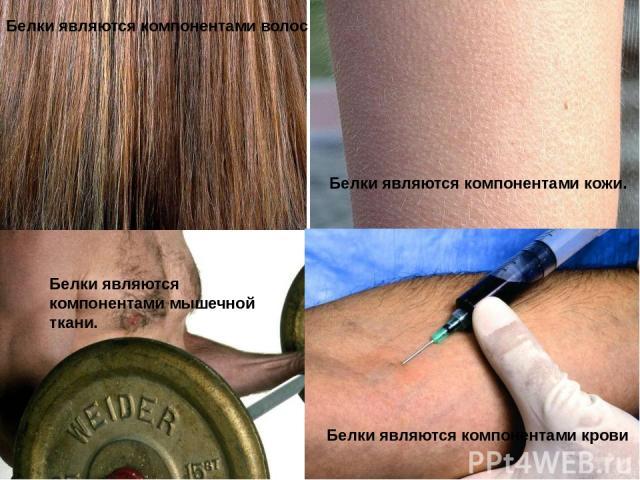 Белки являются компонентами волос Белки являются компонентами кожи. Белки являются компонентами мышечной ткани. Белки являются компонентами крови