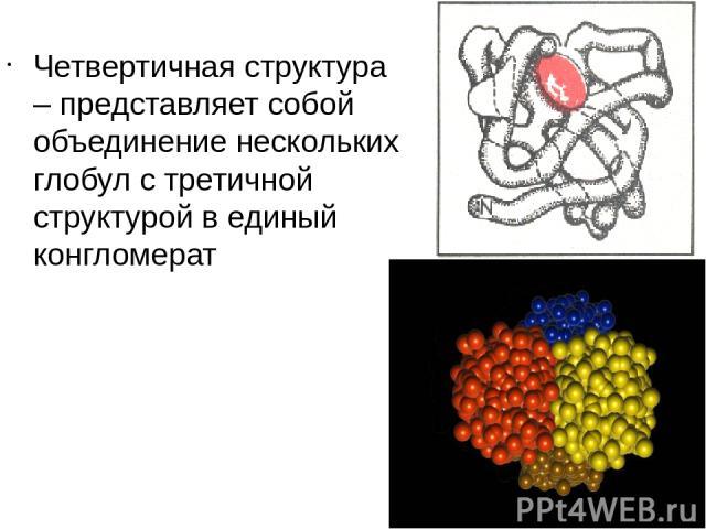 Четвертичная структура – представляет собой объединение нескольких глобул с третичной структурой в единый конгломерат