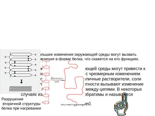 Классификация белков по их функциям • Структурные белки – коллаген, склеротин, эластин. • Каталитические белки – полимеразы, рибонуклеазы. • Регуляторные белки – инсулин, глюкагон. • Транспортные белки – гемоглобин, гемоцианин. • Защитные белки – ан…