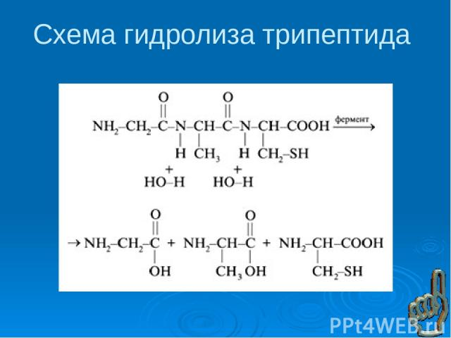 Норма белка в организме человека
