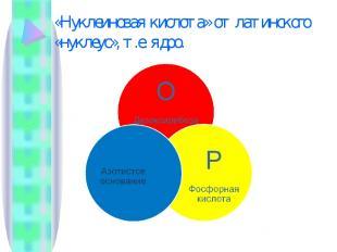 «Нуклеиновая кислота» от латинского «нуклеус», т.е. ядро.