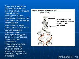 Здесь указан один из параметров ДНК, это шаг спирали, на каждый полный виток при