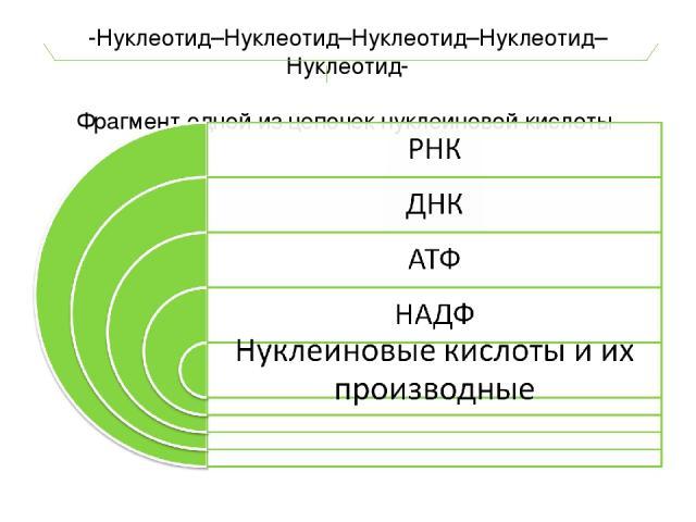 -Нуклеотид–Нуклеотид–Нуклеотид–Нуклеотид–Нуклеотид- Фрагмент одной из цепочек нуклеиновой кислоты