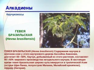 * Алкадиены Каучуконосы ГЕВЕЯ БРАЗИЛЬСКАЯ (Hevea brasiliensis) Содержание каучук