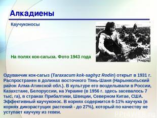 * Алкадиены Каучуконосы Одуванчик кок-сагыз (Taraxacum kok-saghyz Rodin) открыт