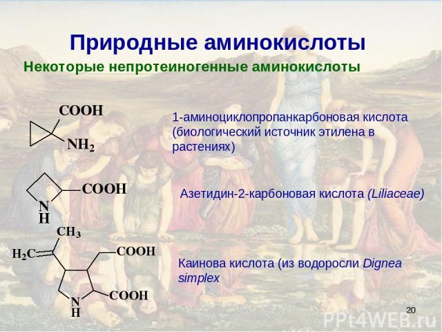 * Природные аминокислоты Некоторые непротеиногенные аминокислоты 1-аминоциклопропанкарбоновая кислота (биологический источник этилена в растениях) Азетидин-2-карбоновая кислота (Liliaceae) Каинова кислота (из водоросли Dignea simplex