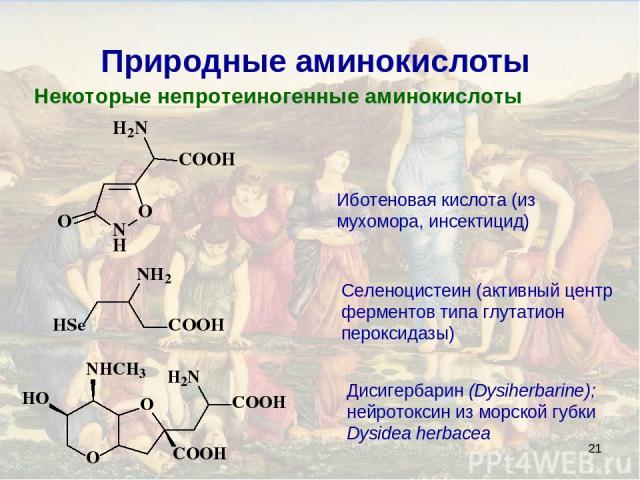 * Природные аминокислоты Некоторые непротеиногенные аминокислоты Иботеновая кислота (из мухомора, инсектицид) Селеноцистеин (активный центр ферментов типа глутатион пероксидазы) Дисигербарин (Dysiherbarine); нейротоксин из морской губки Dysidea herbacea