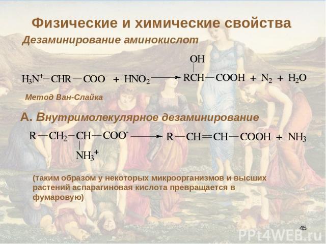 * Дезаминирование аминокислот Метод Ван-Слайка А. Внутримолекулярное дезаминирование (таким образом у некоторых микроорганизмов и высших растений аспарагиновая кислота превращается в фумаровую) Физические и химические свойства