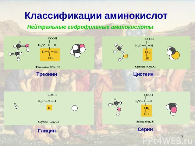 * Классификации аминокислот Нейтральные гидрофильные аминокислоты Глицин Серин Треонин Цистеин