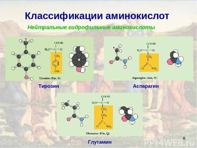 * Классификации аминокислот Нейтральные гидрофильные аминокислоты Тирозин Аспарагин Глутамин