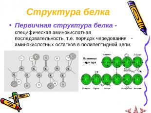 Структура белка Первичная структура белка - специфическая аминокислотная последо