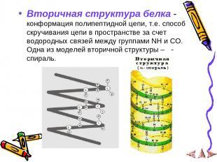 Вторичная структура белка - конформация полипептидной цепи, т.е. способ скручива