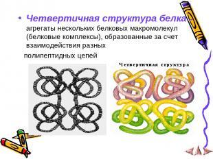 Четвертичная структура белка – агрегаты нескольких белковых макромолекул (белков