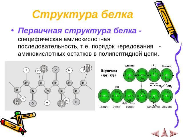 Структура белка Первичная структура белка - специфическая аминокислотная последовательность, т.е. порядок чередования α- аминокислотных остатков в полипептидной цепи.