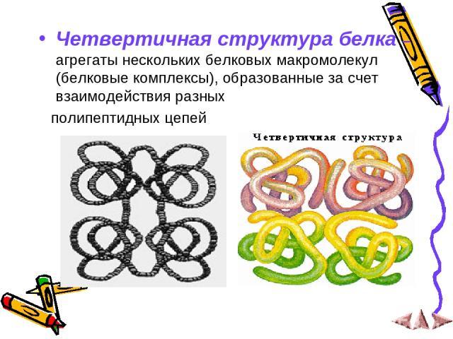 Четвертичная структура белка – агрегаты нескольких белковых макромолекул (белковые комплексы), образованные за счет взаимодействия разных полипептидных цепей