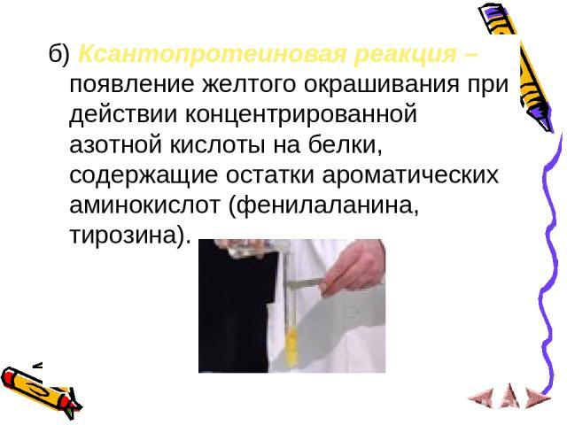 б) Ксантопротеиновая реакция – появление желтого окрашивания при действии концентрированной азотной кислоты на белки, содержащие остатки ароматических аминокислот (фенилаланина, тирозина).