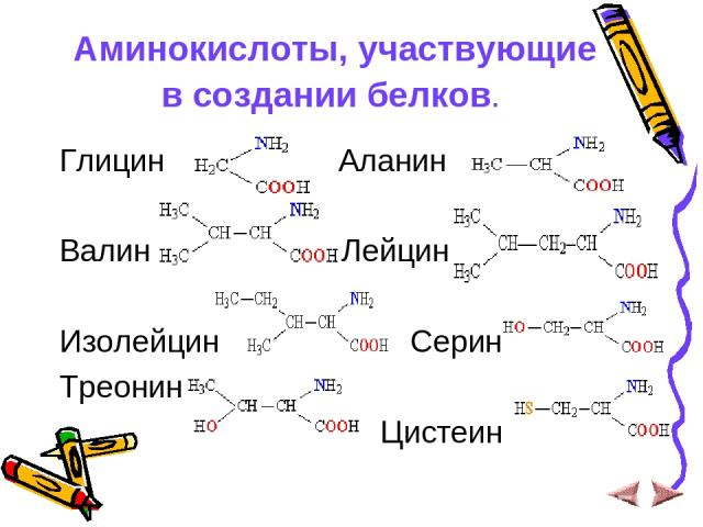 Аминокислоты, участвующие в создании белков. Глицин Аланин Валин Лейцин Изолейцин Серин Треонин Цистеин