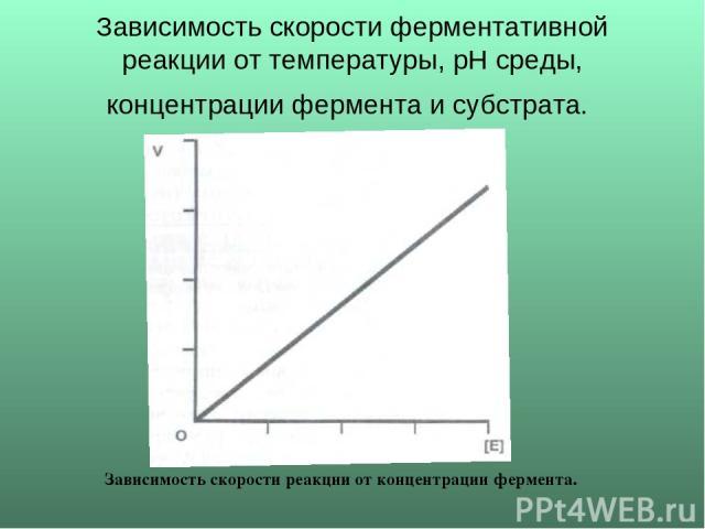 Зависимость скорости ферментативной реакции от температуры, рН среды, концентрации фермента и субстрата. Зависимость скорости реакции от концентрации фермента.