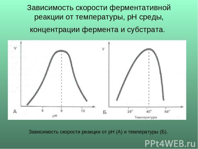 Зависимость скорости ферментативной реакции от температуры, рН среды, концентрации фермента и субстрата. Зависимость скорости реакции от рН (А) и температуры (Б).