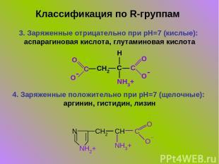 3. Заряженные отрицательно при pH=7 (кислые): аспарагиновая кислота, глутаминова