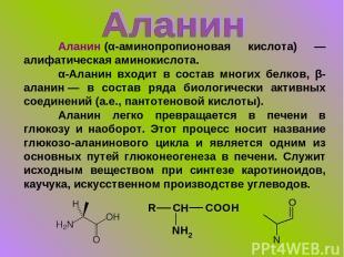 Аланин(α-аминопропионовая кислота) — алифатическая аминокислота. α-Аланин входи