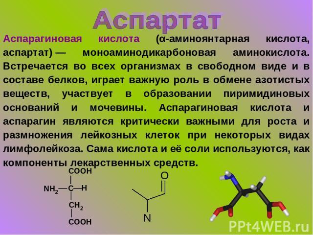 Аспарагиновая кислота (α-аминоянтарная кислота, аспартат)— моноаминодикарбоновая аминокислота. Встречается во всех организмах в свободном виде и в составе белков, играет важную роль в обмене азотистых веществ, участвует в образовании пиримидиновых …