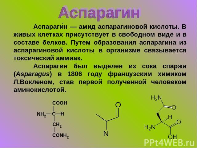 Аспараги н — амид аспарагиновой кислоты. В живых клетках присутствует в свободном виде и в составе белков. Путем образования аспарагина из аспарагиновой кислоты в организме связывается токсический аммиак. Аспарагин был выделен из сока спаржи (Aspara…