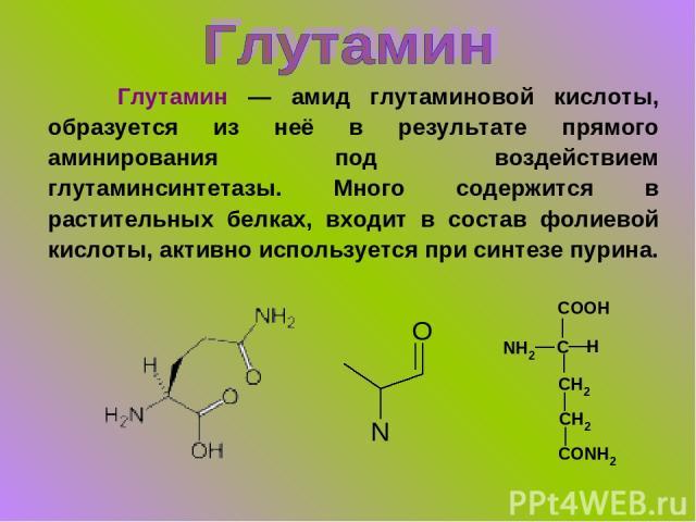 Глутамин — амид глутаминовой кислоты, образуется из неё в результате прямого аминирования под воздействием глутаминсинтетазы. Много содержится в растительных белках, входит в состав фолиевой кислоты, активно используется при синтезе пурина.