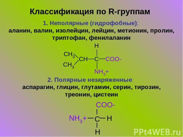 Классификация по R-группам 1. Неполярные (гидрофобные): аланин, валин, изолейцин, лейцин, метионин, пролин, триптофан, фенилаланин 2. Полярные незаряженные: аспарагин, глицин, глутамин, серин, тирозин, треонин, цистеин