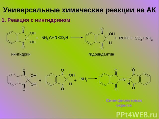 Универсальные химические реакции на АК 1. Реакция с нингидрином + + + + нингидрин гидриндантин + + Сине-фиолетовая окраска