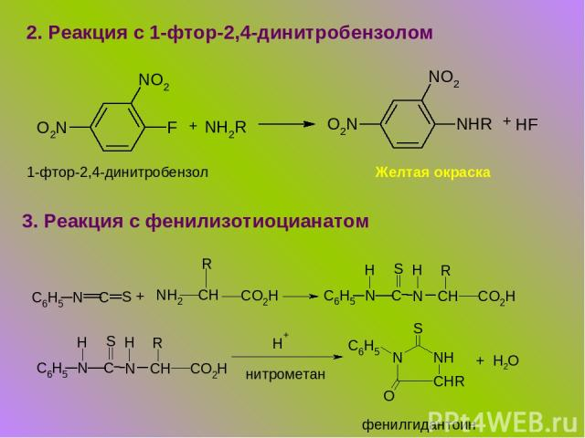 2. Реакция с 1-фтор-2,4-динитробензолом + + 1-фтор-2,4-динитробензол Желтая окраска 3. Реакция с фенилизотиоцианатом + нитрометан фенилгидантоин + Н2О