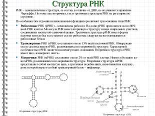 РНК – одноцепочечная структура, ее состав, в отличие от ДНК, не подчиняется прав